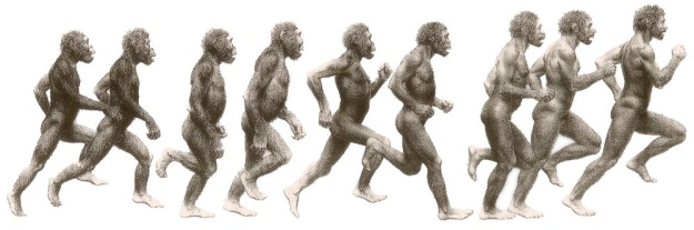 human-evolution-color