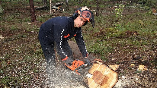 Många skogsarbetare skadas