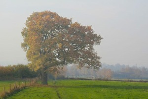 Lopsided_tree_-_geograph.org.uk_-_607169_recolored