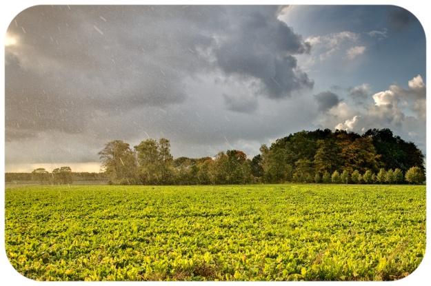 Passerande_landskap_i_regn_och_sol